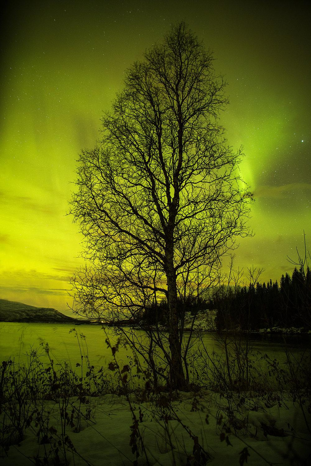 treeaurora.jpg