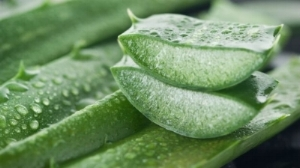 Aloe: contains two hormones, namely Auxin and Gibberellins which provide wound healing and anti-inflammatory properties that reduce skin inflammation and can aid with skin conditions such as psoriasis, acne and eczema.