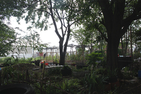 Gary Ducket Korean Natural Farmspace in Kensington, Philadelphia, PA