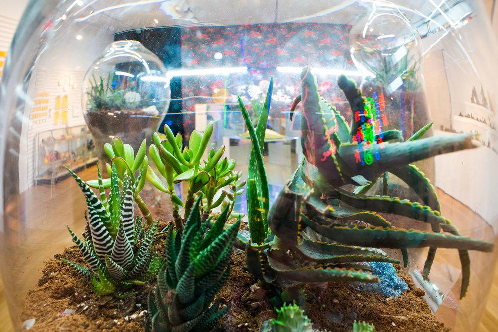 Paula Hayes terrarium (2014) (photo by Eric Scott)