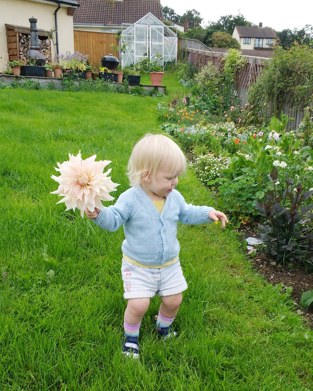 Proof of the size of those dahlia compared to Immy! Both beautiful!