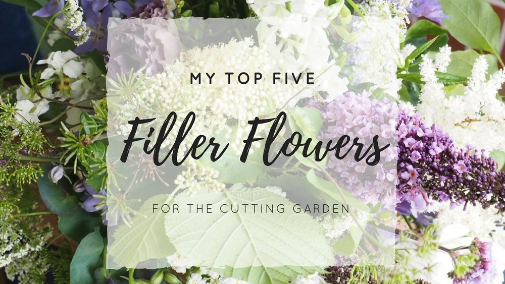 My Top 5 Filler Flowers for the Cutting Garden — Sarah Hill Flowers