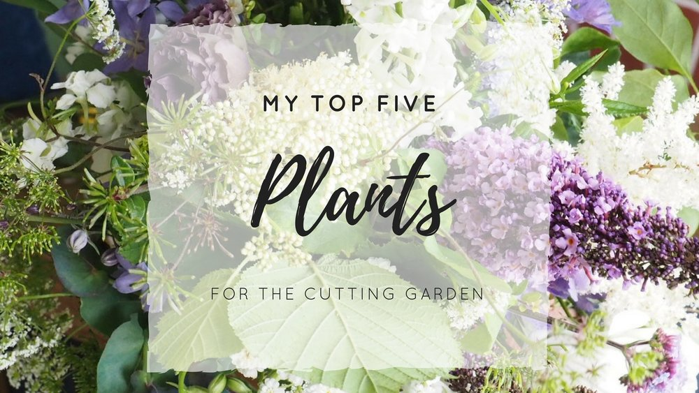 My Top 5 Plants for the Cutting Garden