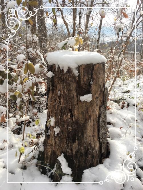 winter woods 4.jpg