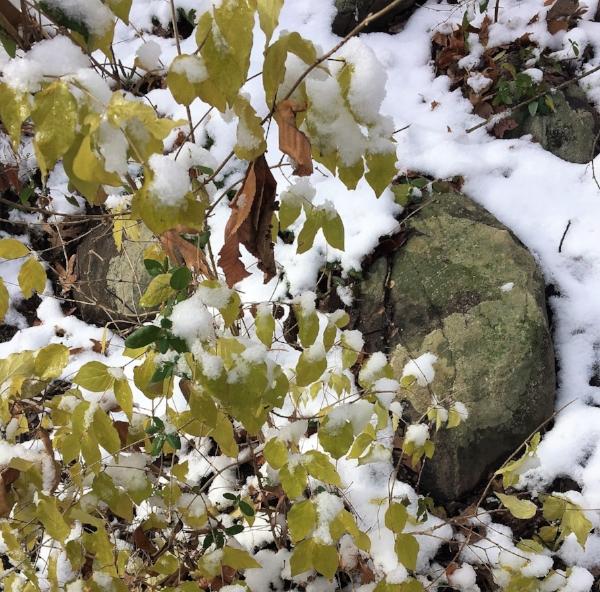 winter woods 8.jpg