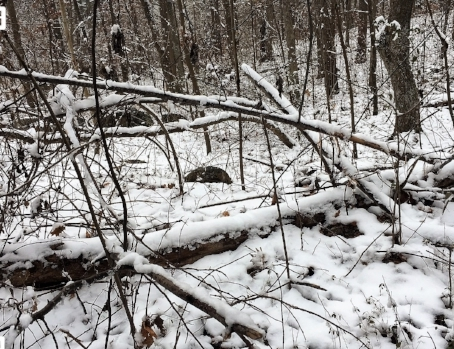 winter woods 5.jpg