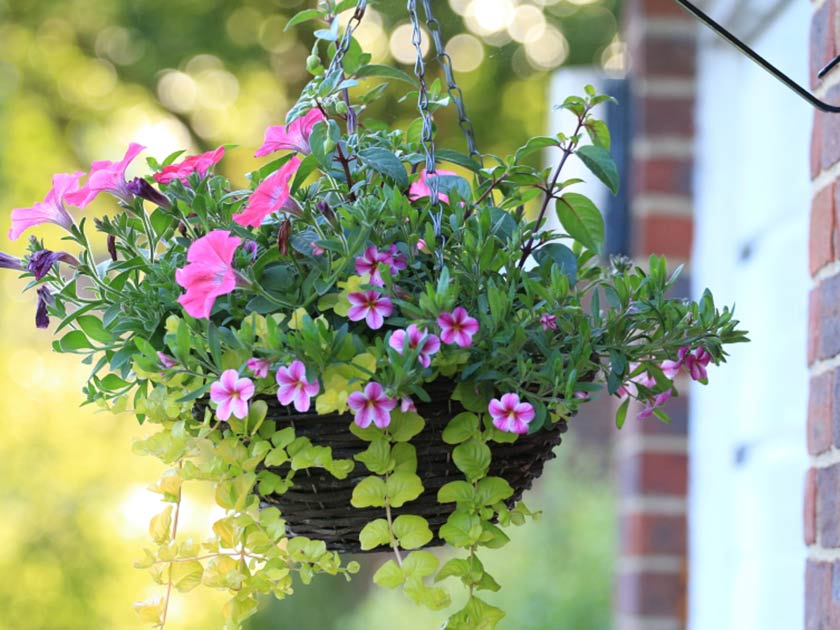 Hanging Baskets   Hanging baskets perfect for Mother's Day and Memorial Day cookouts.