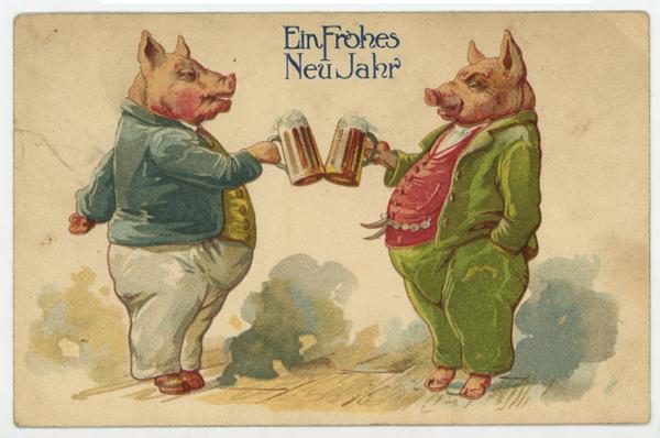 Pigs drinking beer