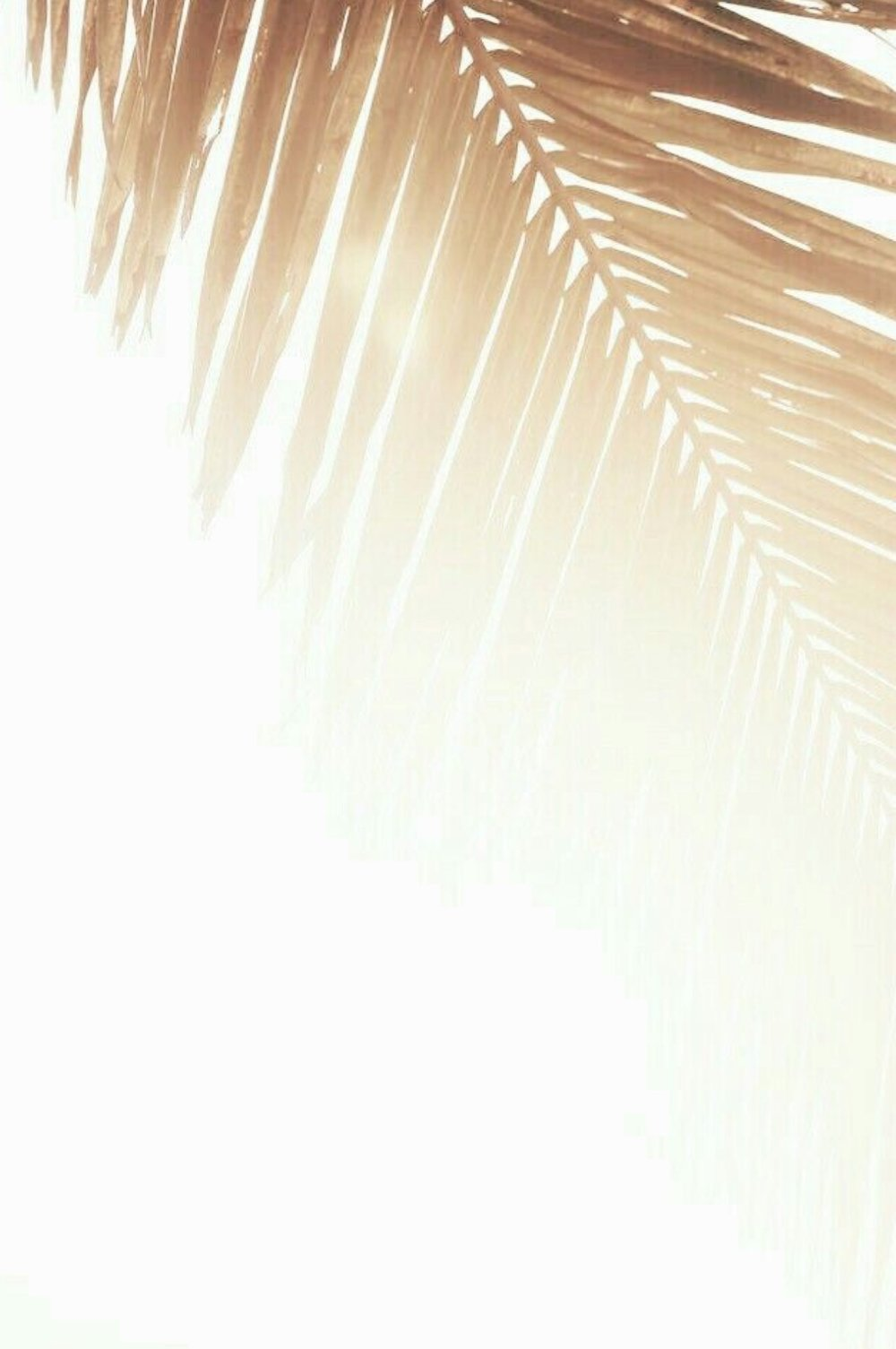 FullSizeRender 10.jpg