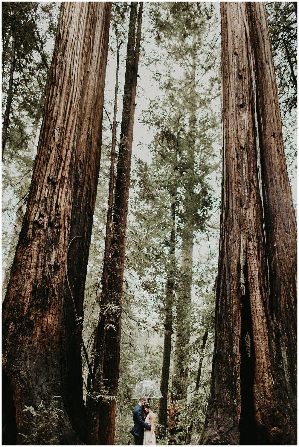 redwood elopement wedding santa cruz california_0130.jpg