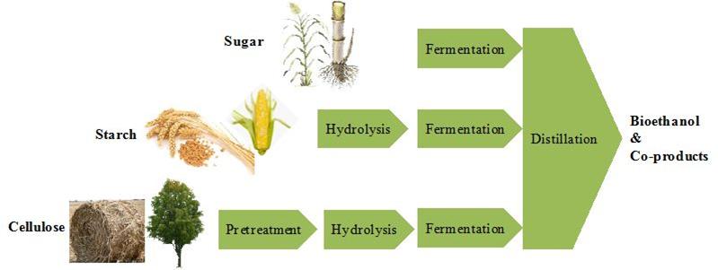 Bioethanol Sources & Processes