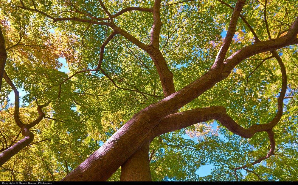 Japanese_Trees_(8130466566).jpg