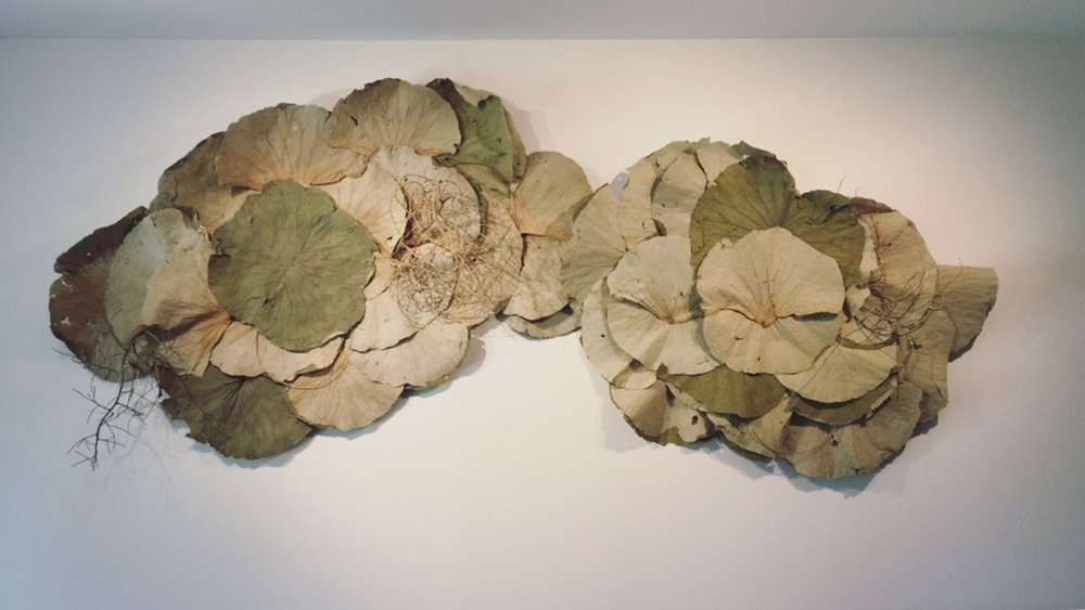 Bloodwood Botanica | Dried lotus leaf wall sculpture