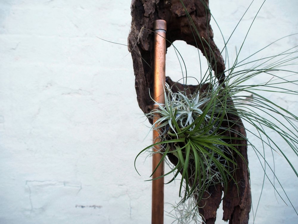 Bloodwood Botanica | Living air plant Sculpture