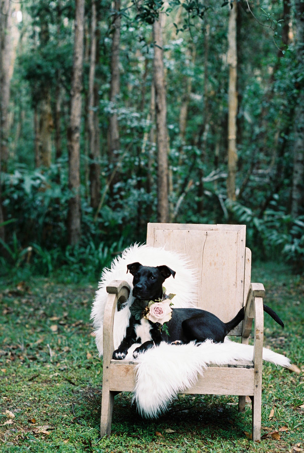 Bloodwood Botanica | Floral Dog collar
