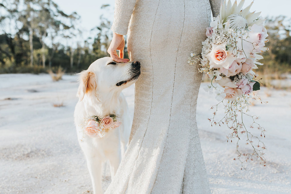 Bloodwood Botanica | Wedding with your furbaby