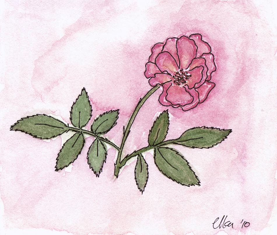 Prayer-Rose-300x255.jpg