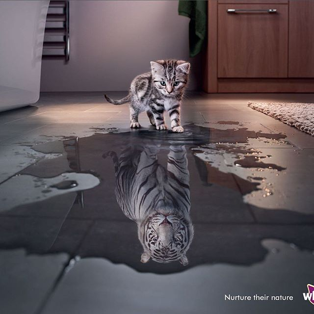 Search for the best photographer you can find – one that suits the style and result you are trying to achieve. No Vacancy creative director and author, Nick Bonney art directed this Whiskas advertisement with the world's leading animal photographer @timflachphoto in London.⠀ ⠀ #hotel #hotelroom #hotelmarketing #marketing #marketingtips #marketingonline #hotelier #hoteldesign #marketingstrategy #kitten #reflection #whitetiger #tiger #photograph #photooftheday #photos #photographer #animalphotos #animalphotography #hoteliers #advertising