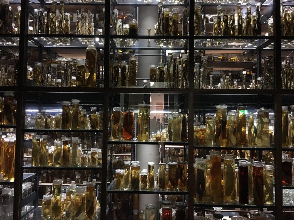 Naturkunden Museum (1).JPG