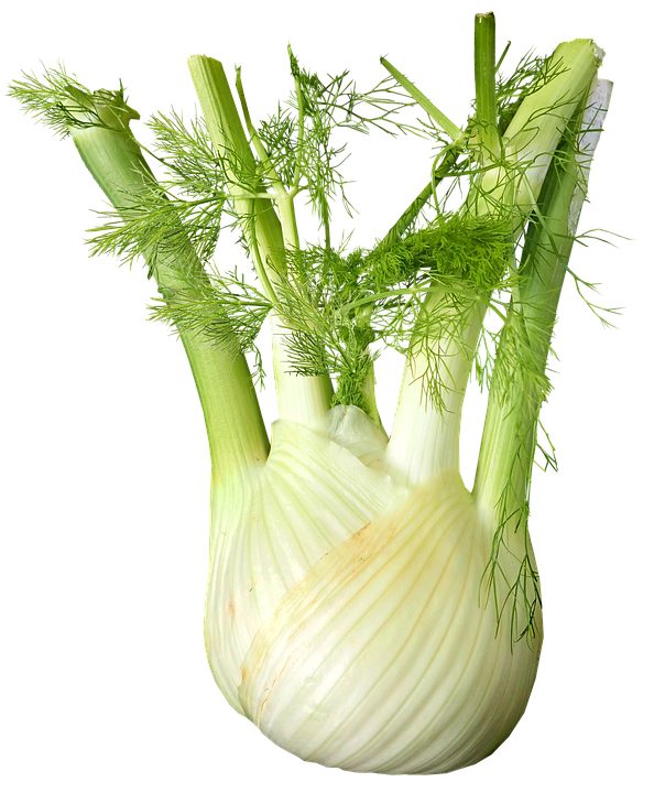 fennel-3657761_960_720.png