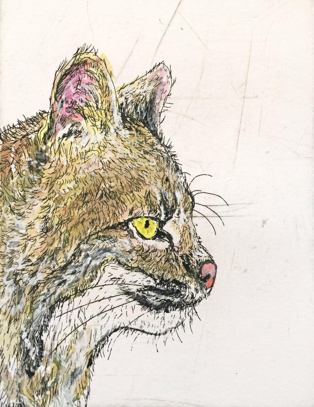 Wildcat in Color