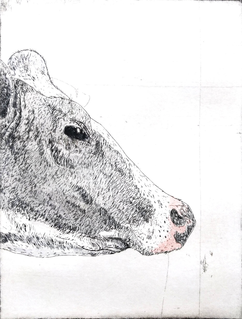 Cow in Color