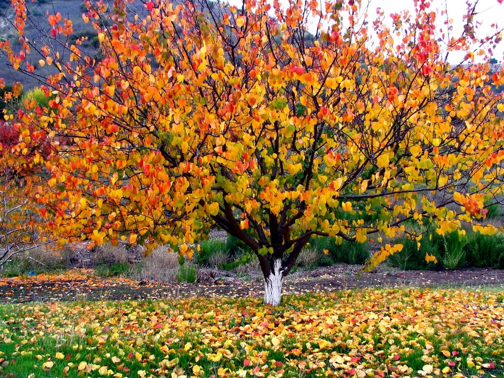 Fall foliage livens up the whole season.