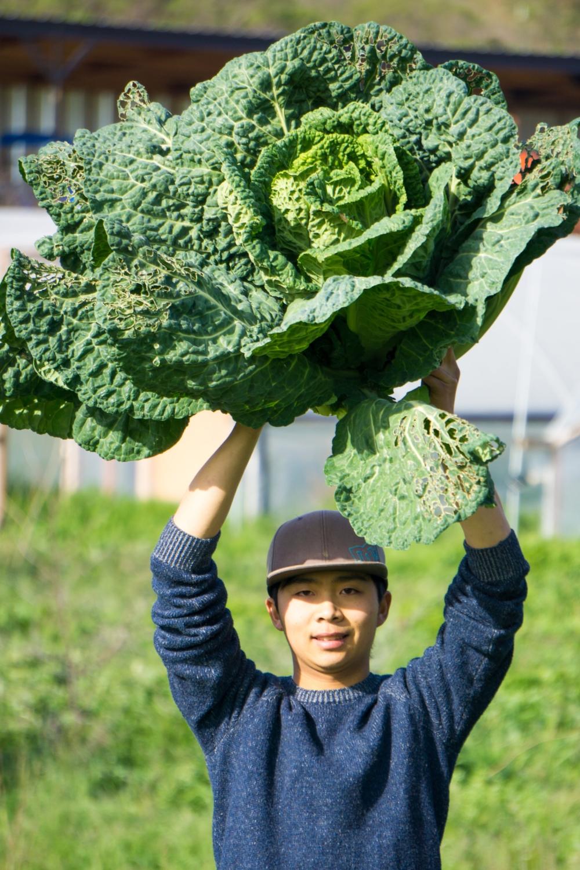 Jumbo cabbage!