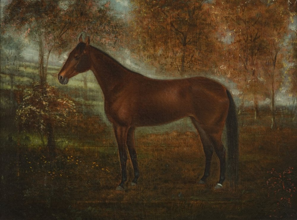 southern portrait of a horse