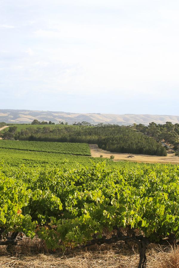 p113:2 Vineyards Fleurieu Peninsula-.jpg