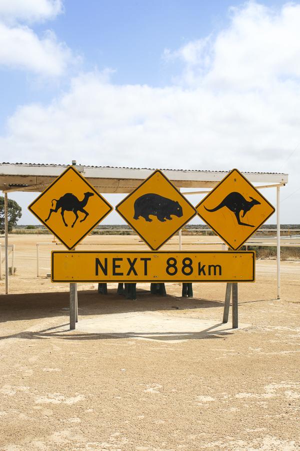 p160:1 Animals sign.jpg