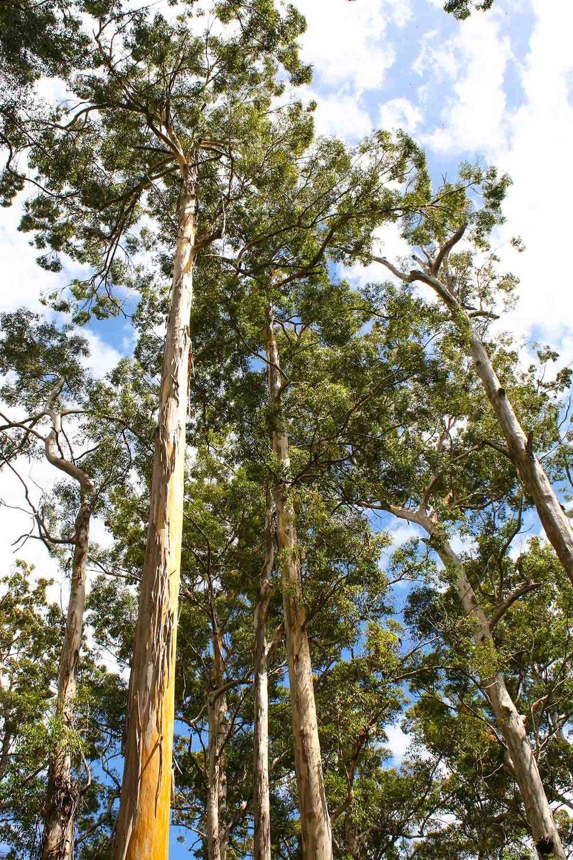 p173 trees-_resized2.jpg