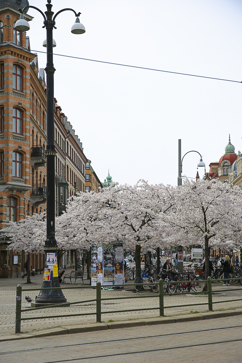 Goteborg Blossom-0288.jpg