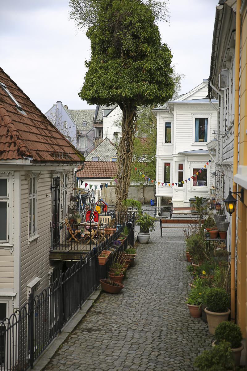 Bergen Bunting-0474.jpg