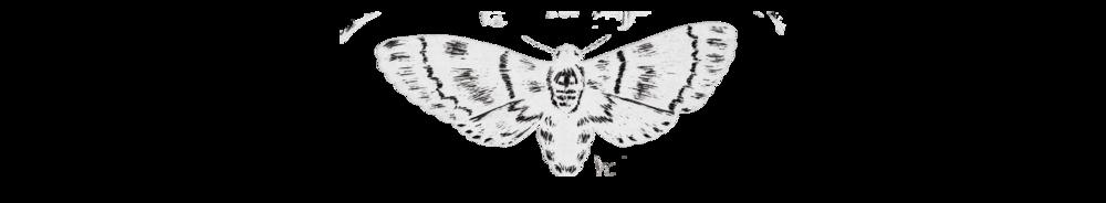 Bio Image.png