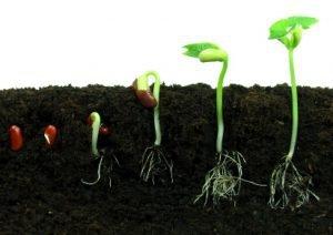 sproutt.jpg