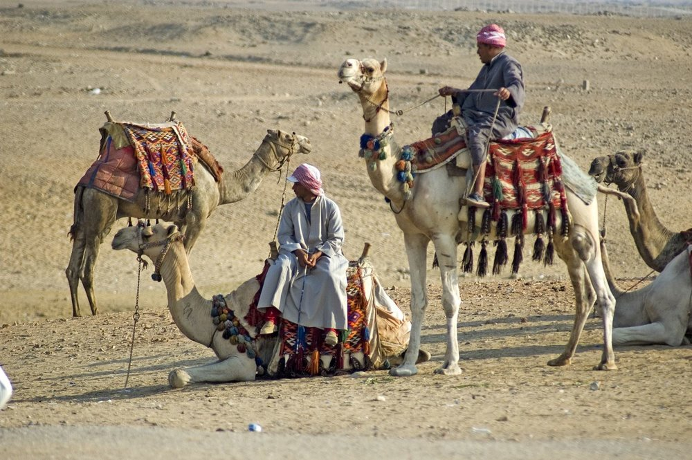 Camel rides through the desert (Customised Tours to The Middle East)