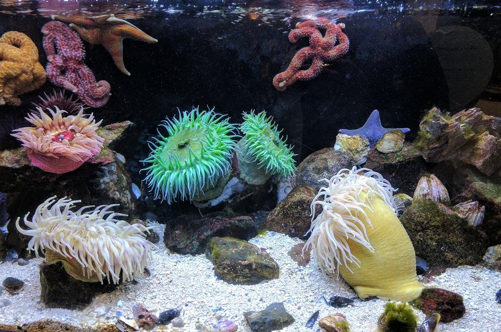 ocean reef corals
