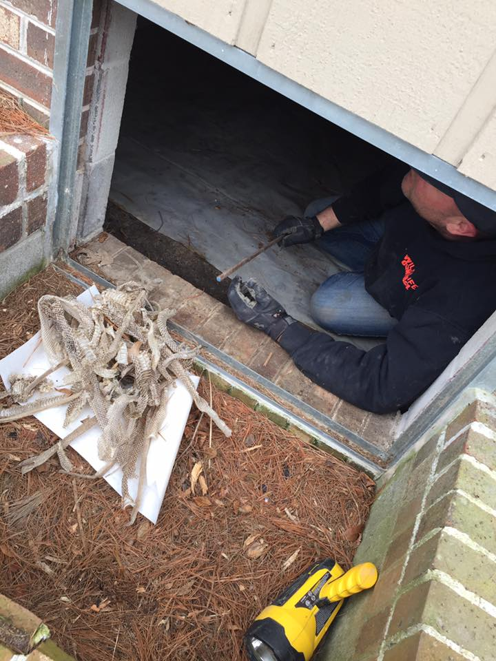 bay-area-wildlife-employee-removing-snake-skins-from-crawlspace