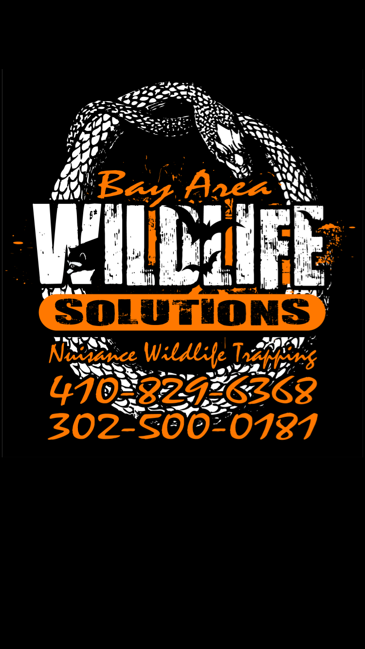 bay-area-wildlife-solutions-logo