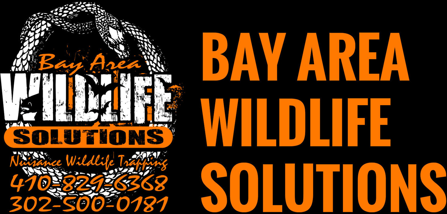 Bay Area Wildlife Solutions