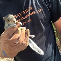 baby squirrel.jpg