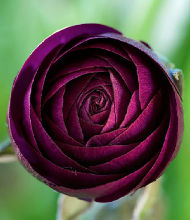 Garden photographer: Clive Nichols