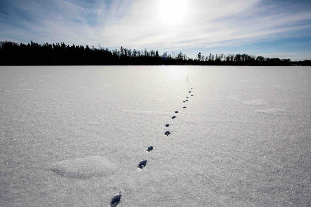 Vinter yoga retreat.jpg
