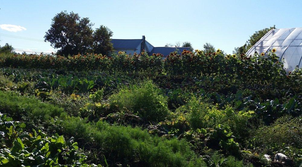 The farm outside of Potsdam New York, where I starting thinking like an agronomist again.