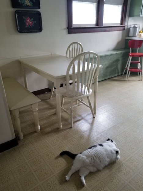 Miss Kitty and The Kitchen Table