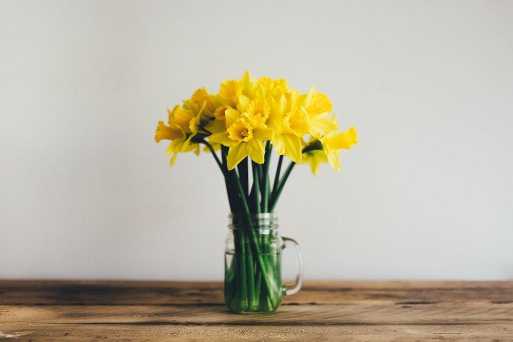 Daffodils (Free).jpg