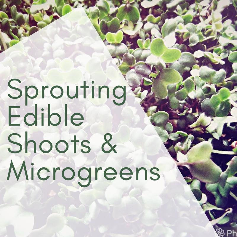 Sprouting Edible Shoots & Microgreens