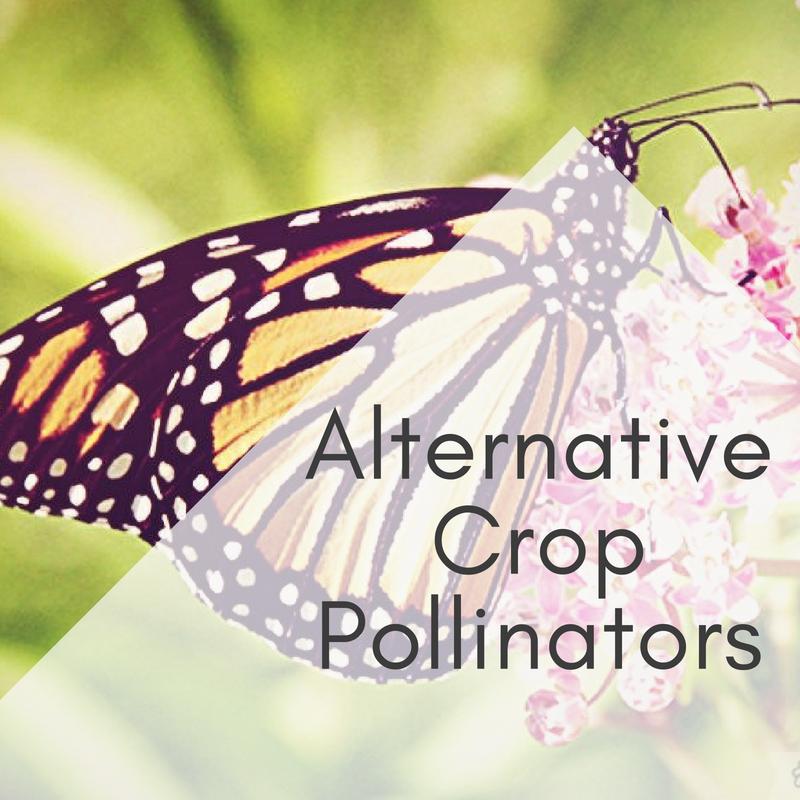 Alternative Crop Pollinators