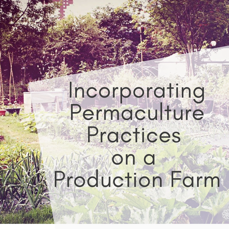 Incorporating Permaculture Practices on a Production Farm